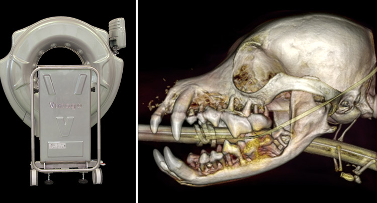 CT Scan for Dentistry at Gold Coast Center For Veterinary Care