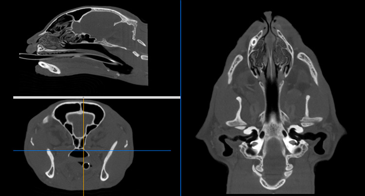 CT Scan for Diagnostic Testing at Gold Coast Center For Veterinary Care